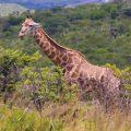 Kwazulu Natal - South Africa - 2012