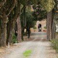 Poggio Piglia - Chiusi - Tuscany - 2010